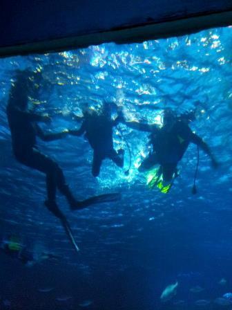 Disney_Diving_1