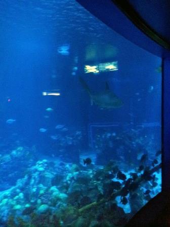 Disney_Diving_3