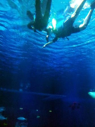 Disney_Diving_4