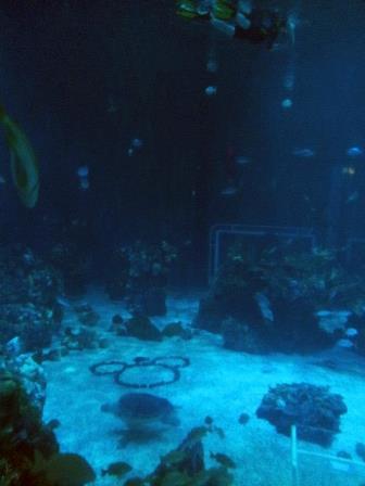Disney_Diving_5