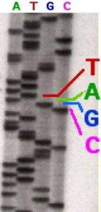 dna_sequencing